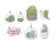 Διανυσματικά terrariums γυαλιού με τα succulents καθορισμένα επίσης corel σύρετε το διάνυσμα απεικόνισης Στοκ Εικόνες