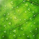 Διανυσματικές απελευθερώσεις νερού στην πράσινη μακρο ανασκόπηση φύλλων διανυσματική απεικόνιση
