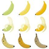 Διανυσματικές καθορισμένες μπανάνες Στοκ Εικόνες
