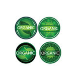 Διανυσματικές οργανικές ετικέτες καθορισμένες, φυσικό, πράσινο φύλλο, περιβάλλον, γραφικό σχέδιο στοιχείων φύσης Στοκ φωτογραφία με δικαίωμα ελεύθερης χρήσης
