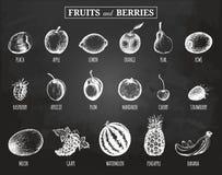 Διανυσματικές φρούτα και απεικονίσεις μούρων καθορισμένες Οργανικός, eco, βιο τρόφιμα Συρμένα χέρι σκίτσα στο δαμάσκηνο πινάκων κ απεικόνιση αποθεμάτων