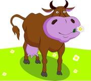 Διανυσματική αγελάδα Στοκ φωτογραφίες με δικαίωμα ελεύθερης χρήσης