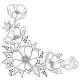 Διανυσματική ανθοδέσμη γωνιών σχεδίων χεριών με το λουλούδι ή Windflower Anemone περιλήψεων, οφθαλμός και φύλλο στο Μαύρο που απο ελεύθερη απεικόνιση δικαιώματος