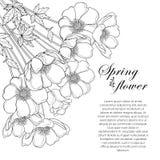 Διανυσματική ανθοδέσμη γωνιών σχεδίων χεριών του λουλουδιού ή Windflower Anemone περιλήψεων, οφθαλμός και φύλλο στο Μαύρο που απο ελεύθερη απεικόνιση δικαιώματος