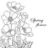 Διανυσματική ανθοδέσμη με το λουλούδι ή Windflower Anemone περιλήψεων, οφθαλμός και φύλλα που απομονώνονται στο άσπρο υπόβαθρο Σύ διανυσματική απεικόνιση