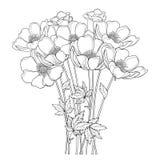 Διανυσματική ανθοδέσμη σχεδίων χεριών με το λουλούδι ή Windflower Anemone περιλήψεων, οφθαλμός και φύλλο στο Μαύρο που απομονώνετ διανυσματική απεικόνιση