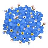 Διανυσματική ανθοδέσμη των μπλε forget-me-not λουλουδιών Στοκ φωτογραφία με δικαίωμα ελεύθερης χρήσης