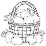 Διανυσματική απεικόνιση για το χρωματισμό Ημέρα των ευχαριστιών Συγκομιδή των μήλων και των αχλαδιών σε ένα καλάθι διανυσματική απεικόνιση