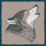 Διανυσματική απεικόνιση ενός ουρλιάζοντας λύκου Στοκ Φωτογραφία