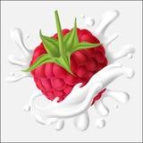 Διανυσματική απεικόνιση ενός juicy σμέουρου με το μίσχο και ένας παφλασμός του γάλακτος, γιαούρτι, κρέμα Στοκ Φωτογραφία