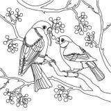 Διανυσματική απεικόνιση ζευγαριού Bullfinch απεικόνιση αποθεμάτων