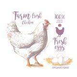 Διανυσματική απεικόνιση κοτόπουλου Στοκ Εικόνες