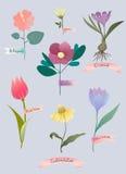Διανυσματική απεικόνιση με τα λουλούδια άνοιξη Στοκ εικόνα με δικαίωμα ελεύθερης χρήσης