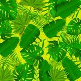 Διανυσματική απεικόνιση με τα πράσινα τροπικά φύλλα Θερινή ανασκόπηση Στοκ φωτογραφία με δικαίωμα ελεύθερης χρήσης