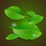 Διανυσματική απεικόνιση με τα πράσινα φύλλα Στοκ Φωτογραφία