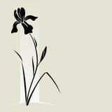 Διανυσματικό λουλούδι ίριδων. Στοκ Εικόνα
