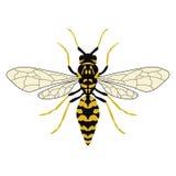 Διανυσματική απεικόνιση μιας σφήκας Τοπ όψη στοκ εικόνες