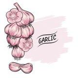 Διανυσματική απεικόνιση περιλήψεων σκόρδου Φυτική έννοια τροφίμων Για την αφίσα, έμβλημα, λογότυπο, εικονίδιο, αυτοκόλλητη ετικέτ στοκ φωτογραφία