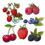 Διανυσματική απεικόνιση σμέουρων κερασιών βατόμουρων βακκινίων φραουλών ελεύθερη απεικόνιση δικαιώματος