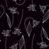 Διανυσματική απεικόνιση συρμένων των χέρι άσπρων τουλιπών στο μαύρο υπόβαθρο Στοκ φωτογραφίες με δικαίωμα ελεύθερης χρήσης