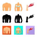 Διανυσματική απεικόνιση της ίνας και του μυϊκού σημαδιού Σύνολο συμβόλου αποθεμάτων ινών και σωμάτων για τον Ιστό απεικόνιση αποθεμάτων