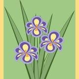 Διανυσματική απεικόνιση της ανθοδέσμης των λουλουδιών ίριδων Στοκ Φωτογραφίες