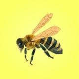 Διανυσματική απεικόνιση της μέλισσας στο κίτρινο υπόβαθρο Στοκ Εικόνα