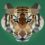 Διανυσματική απεικόνιση της τίγρης στο πράσινο υπόβαθρο Στοκ Εικόνα