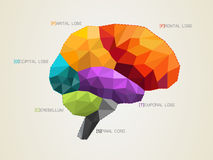 Διανυσματική απεικόνιση του εγκεφάλου ελεύθερη απεικόνιση δικαιώματος