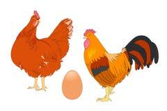 Διανυσματική απεικόνιση του ζωηρόχρωμων κοτόπουλου και του κόκκορα Στοκ Εικόνα
