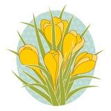 Διανυσματική απεικόνιση του λουλουδιού κρόκων Στοκ Φωτογραφία