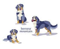 Διανυσματική απεικόνιση του σκυλιού βουνών Bernese Ελεύθερη απεικόνιση δικαιώματος