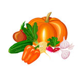 Διανυσματική απεικόνιση του όμορφου ζωηρόχρωμου πιπεριού αγγουριών κραμβών ραδικιών σκόρδου κολοκύθας εικονιδίων λαχανικών Στοκ φωτογραφίες με δικαίωμα ελεύθερης χρήσης