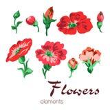 Διανυσματική απεικόνιση των κόκκινων και πορτοκαλιών στοιχείων λουλουδιών Στοκ Εικόνες