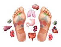 Διανυσματική απεικόνιση των πελμάτων των ποδιών με χαρακτηρισμένος α ελεύθερη απεικόνιση δικαιώματος