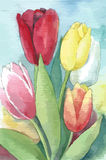 Διανυσματική απεικόνιση των τουλιπών Floral απεικόνιση Watercolor Στοκ φωτογραφίες με δικαίωμα ελεύθερης χρήσης
