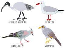 Διανυσματική απεικόνιση των χαριτωμένων κινούμενων σχεδίων πουλιών - Αυστραλός διανυσματική απεικόνιση