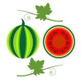 Διανυσματική απεικόνιση φρούτων Λεπτομερή εικονίδια του καρπουζιού με τα φύλλα, σύνολο και μισός, που απομονώνονται πέρα από το ά διανυσματική απεικόνιση