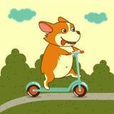 Διανυσματική απεικόνιση, χαριτωμένο σκυλί στο μηχανικό δίκυκλο λακτίσματος Στοκ φωτογραφία με δικαίωμα ελεύθερης χρήσης