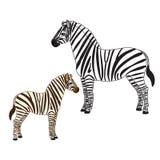 Δύο zebras Στοκ Εικόνες