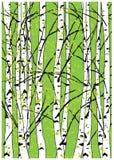 Διανυσματική απεικόνιση Sping των δασικών όμορφων δέντρων σημύδων δέντρων οξιών Στοκ Φωτογραφίες