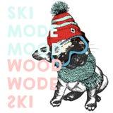 Διανυσματική αφίσα με το στενό επάνω πορτρέτο του σκυλιού λαγωνικών Διάθεση τρόπου σκι Κουτάβι που φορούν beanie, προστατευτικά δ Στοκ εικόνα με δικαίωμα ελεύθερης χρήσης
