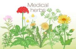 Διανυσματική αφίσα προτύπων με την εικόνα των ιατρικών χορταριών Στοκ Εικόνες