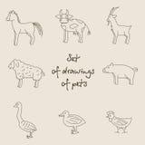 Διανυσματική γραμμική μονοχρωματική απεικόνιση των κατοικίδιων ζώων Ελεύθερη απεικόνιση δικαιώματος
