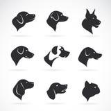 Διανυσματική εικόνα ενός κεφαλιού σκυλιών Στοκ εικόνα με δικαίωμα ελεύθερης χρήσης