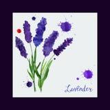 Διανυσματική ευχετήρια κάρτα με lavender watercolor Στοκ Φωτογραφίες