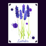 Διανυσματική ευχετήρια κάρτα με lavender watercolor Στοκ εικόνα με δικαίωμα ελεύθερης χρήσης