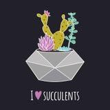 Διανυσματική ζωηρόχρωμη απεικόνιση με τον κάκτο, succulents στο γεωμετρικό δοχείο και τη φράση ` Ι αγάπη succulents ` Στοκ φωτογραφία με δικαίωμα ελεύθερης χρήσης