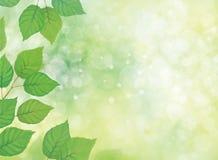 Διανυσματική πράσινη ανασκόπηση φύλλων διανυσματική απεικόνιση