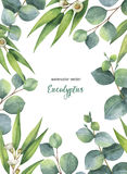 Διανυσματική πράσινη floral κάρτα Watercolor με τα φύλλα και τους κλάδους ευκαλύπτων στο άσπρο υπόβαθρο Στοκ Εικόνα